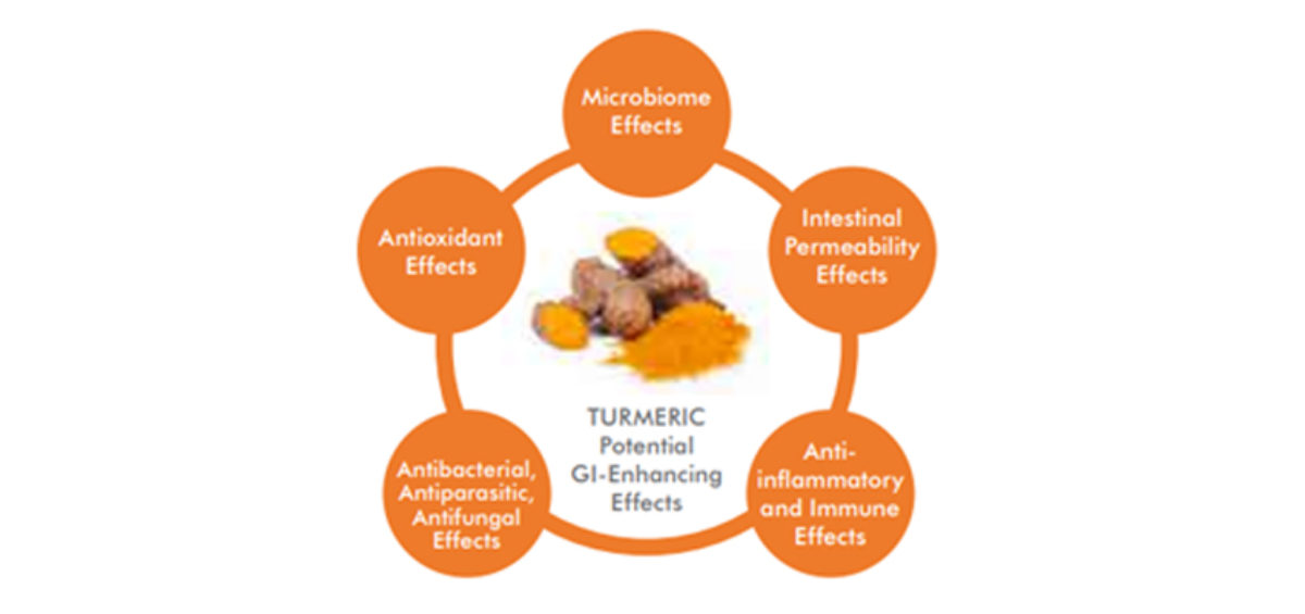 Figure 3: Potential Gastrointestinal-Enhancing Effects of Turmeric that May Contribute to its Systemic Health Effects.